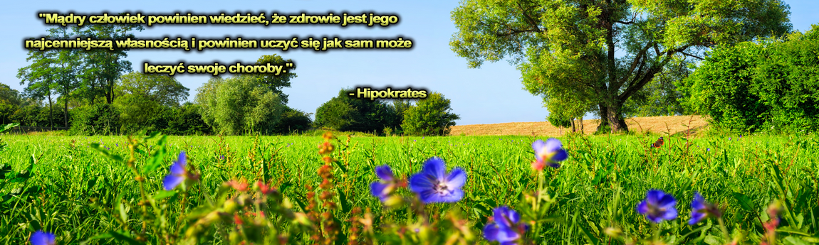 banner_0002.png